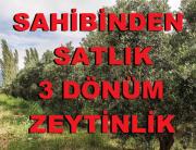 SAHİBİNDEN SATLIK 3 DÖNÜM ZEYTİNLİK